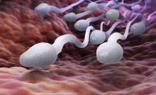 L'étude montre toute l'ampleur et la rapidité des effets de l'alimentation sur le sperme et en particulier, sur sa motilité.