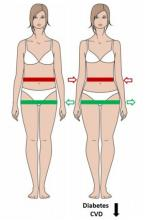 L'évaluation de la masse grasse corporelle doit permettre aux professionnels de santé d'évaluer de manière simple, le risque de maladies cardiométaboliques (Visuel Norbert Stefan).
