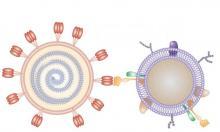 Les nanosponges recouvertes d'une membrane cellulaire humaine agissent comme un leurre pour empêcher le coronavirus de pénétrer dans les cellules (Visuel Nano Letters 2020, DOI: 10.1021/acs.nanolett.0c02278)