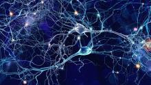 Les cellules humaines ont leurs propres fonctions leur permettant de maintenir l'homéostasie.